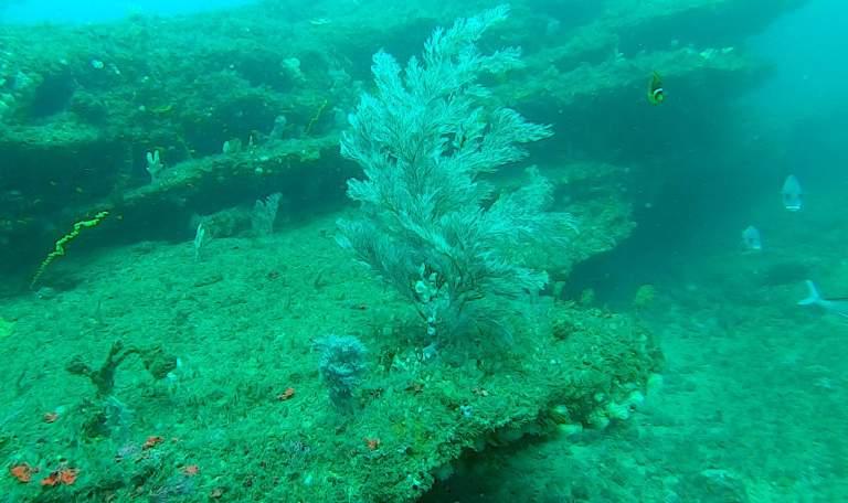 Salmon Reef