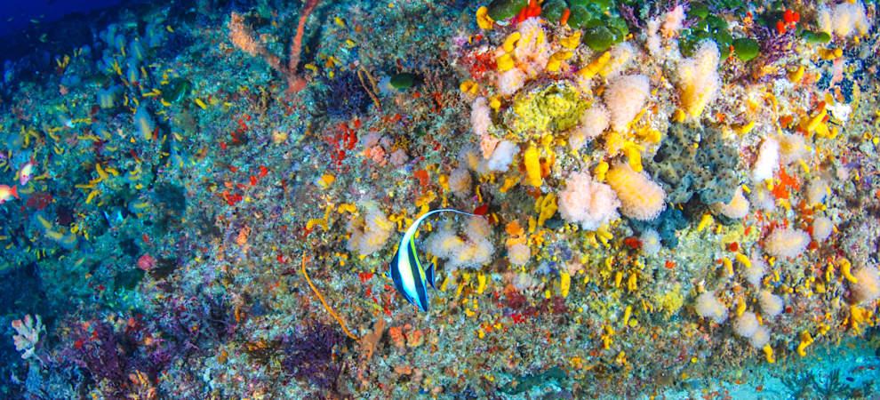 Colours of Protea Banks