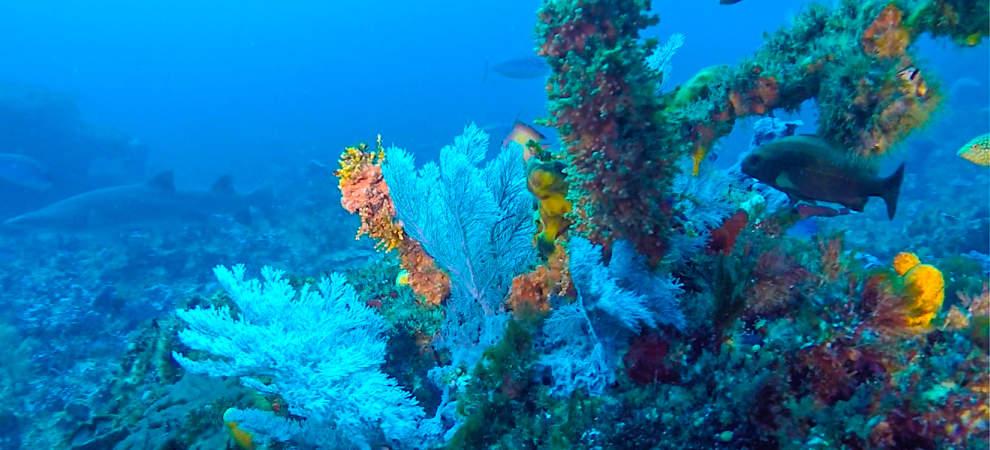 Protea Banks in Colour