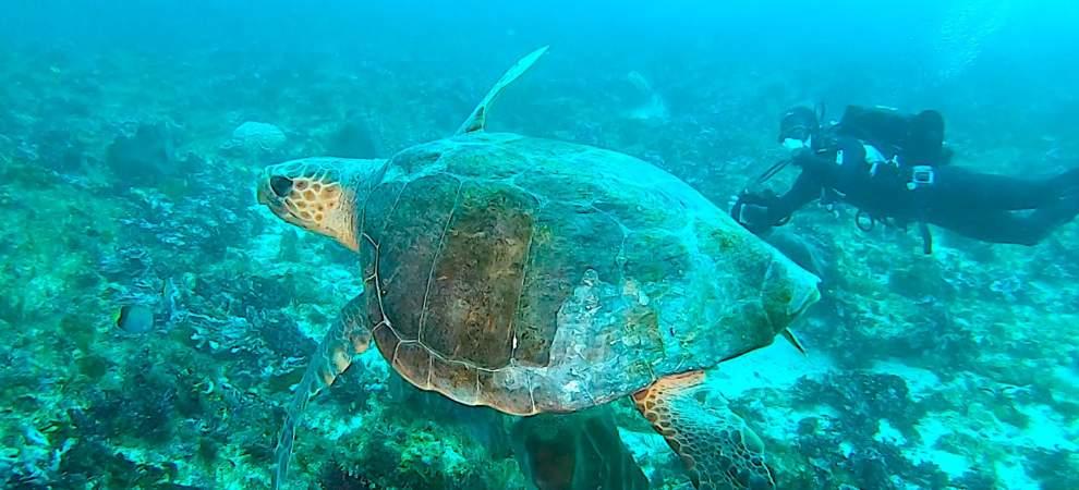 Turtle on Protea Banks