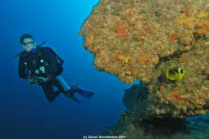 playground-divers-proteareef-008