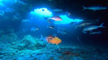 protea-reef-marinelife-dive-with-sharks-fish-in-cave