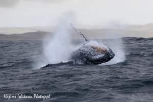 sardine-run-dive-with-sharks-whales-dolphins-birds-011